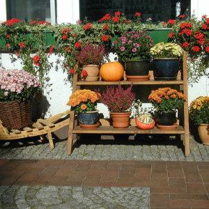 Bild Herbstmotiv im Apothekenhof